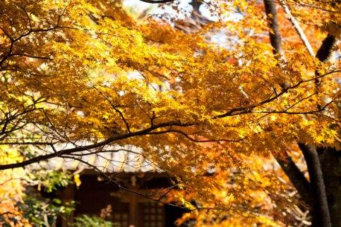 紅葉が折り重なって撮影スポット満載です。