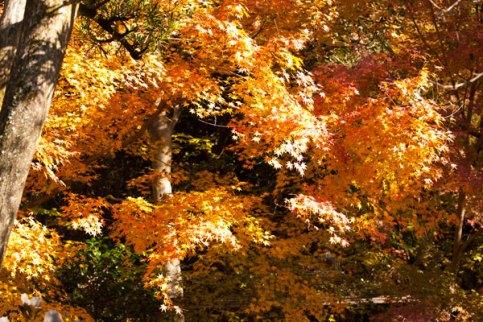 紅葉にあたる陽射し。気持ちが動きます。