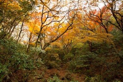 紅葉を見るために側面に登る道がつくられています。中腹くらいまで登った景色。