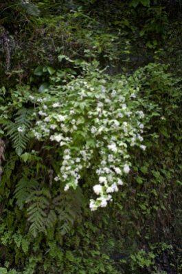 春にはウツギの花をよくみかけます。控えめな色合いがとてもきれいです。