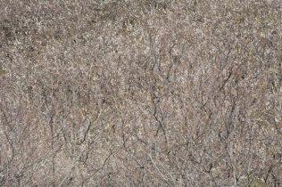 十二所果樹園。丘陵地帯に400本の梅が咲き誇ります。一瞬何の写真かと思ってしまいますが、これが全部梅です。
