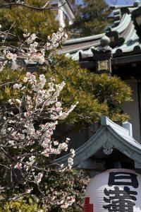 常栄寺(ぼたもち寺)。物語豊かな常栄寺。ひっそりと咲く様に風情があります。