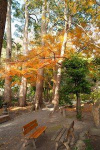 静寂感漂う鎌倉宮の紅葉。ここに来たらベンチに座ってゆっくり楽しみましょう。