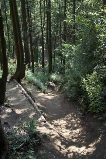 〔地図⑫〕大平山頂上を過ぎるとすぐ古道の風情が戻ってきます。