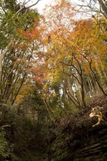 〔地図⑦〕野趣溢れる獅子舞の紅葉。寒さを忘れて佇みます。