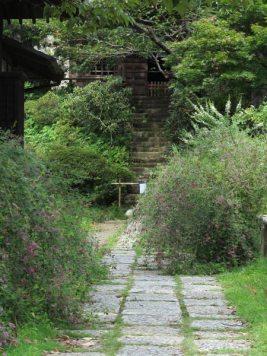 浄光明寺の萩。9月中旬から浄光明寺境内は多くの萩に覆われます。