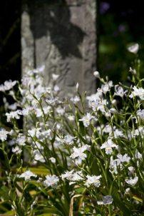 海蔵寺の著莪(シャガ)。門前にある底脱ノ井の傍らに咲いていました。