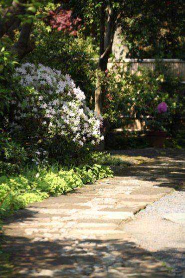 浄妙寺の躑躅(ツツジ)。喜泉庵の入口あたり。