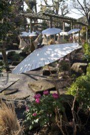 神苑牡丹園牡丹(ボタン)。廻廊式日本庭園になっており、とても心地よく歩くことができます。