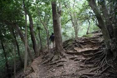 葛原岡・大仏ハイキングコース。森々とした道を進みます。