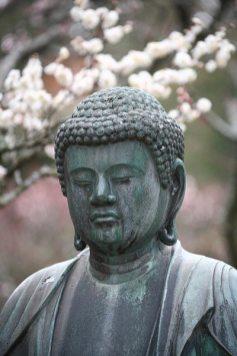 東慶寺の梅並木の奥には梅化粧した仏様(金仏)。6月には背後に花菖蒲が咲きます。