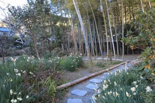 満願寺本堂左手には禅林百花苑があり、端正な竹林を背景に四季折々の花が楽しめます。