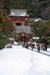 雪景色の鶴岡八幡宮。記録的な大雪となった平成26年(2014年)2月8日から一夜明けた9日の写真です。雪が降ると境内にある神苑牡丹園は雪と寒牡丹という最高の景色が見られます。