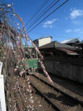 木木のベランダからは、すぐ側を走る江ノ電を見ることが出来ます。