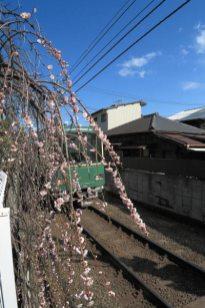 鎌倉駅と和田塚駅の間、春の鎌倉、軒先をかすめて走る江ノ電。