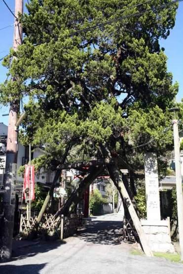 〈王道〉金沢街道をゆく。次は荏柄天神社。源頼朝も篤く敬った日本三古天神の一つです。