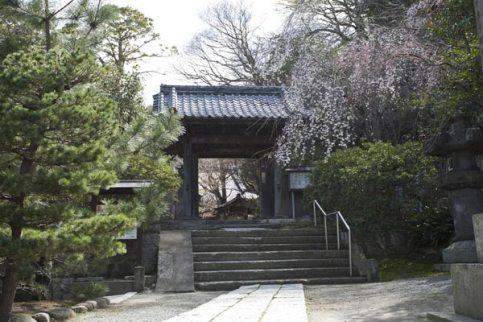 安国論寺。あじさいだけでなく、梅、桜、山茶花、紅葉など四季を通じて花木が豊かな場所です。