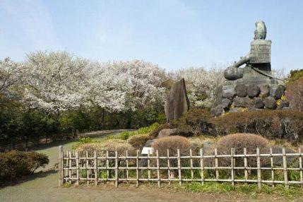 源氏山公園の桜。源頼朝像を囲んで咲く様は、その偉業を讃えているようです。