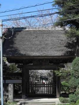 桜の季節の極楽寺。風情のある江ノ電極楽寺駅も魅力的。