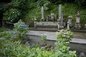 妙本寺、比企一族の墓前を弔うように咲くあじさい。