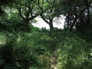 畠山城址。834年前、日本の歴史が大きく動いた治承4年、激動の舞台です。