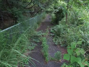 舗装道路でさえかなり鬱蒼と草木が覆っています。