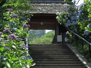 東慶寺の山門。春は梅、夏はあじさい秋は紅葉に彩られます。
