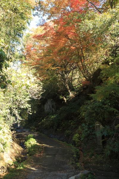 朝比奈切通しの紅葉。入口といえる三郎の滝あたりから右手頭上を紅葉が覆います。