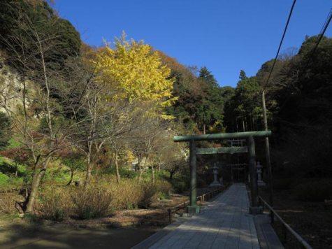 建長寺の紅葉。半僧坊鳥居のちかくには銀杏が色づきます。