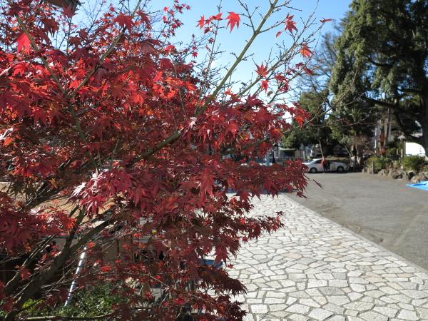 2014年12月18日、大塔宮(鎌倉宮)の紅葉。