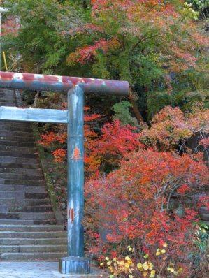 建長寺半僧坊の鳥居は紅葉が飾ります。