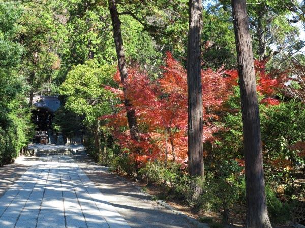 鶴岡八幡宮、鎌倉国宝館前の紅葉。奥に白幡神社がみえています。