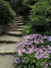 浄妙寺、あじさいの小路。