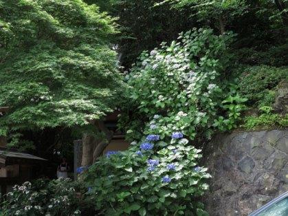 018_報国寺のあじさい-2