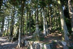 芦ノ湖上に建つ平和の鳥居の裏は真っ直ぐ箱根神社本殿へと至る参道です。