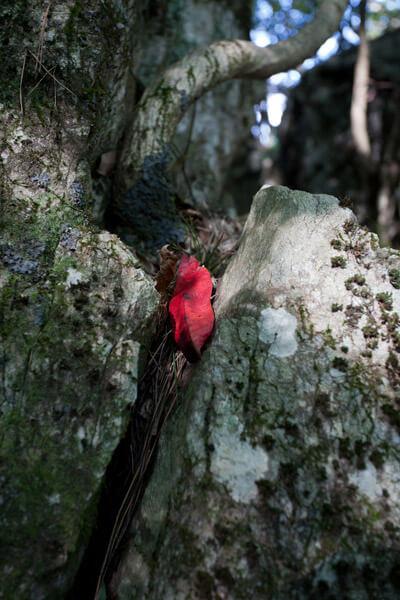 笄(こうがい)岩にあった紅い落ち葉。案内板で歴史を知ったら余計きれいにみえました。