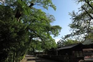 静岡の青い空と三嶋大社。