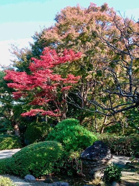 平成29年(2017年)11月16日 浄妙寺の紅葉。