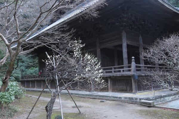 平成31年(2019年)2月12日、妙本寺の梅