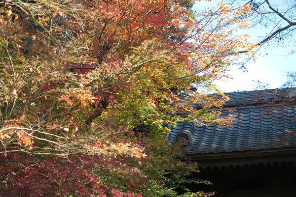 令和元年12月17日、円覚寺の紅葉