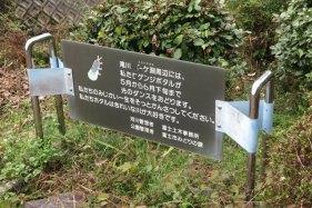 鎧ヶ淵には源氏蛍が飛ぶようです。5月から6月下旬にまた訪れてみたいです。