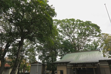 横割八幡宮の境内は市の保存樹林に指定されています。