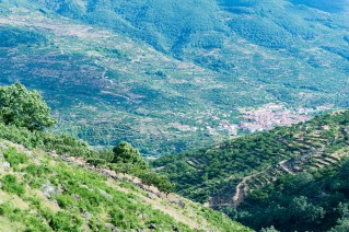 Valle del Jerte Cerecera