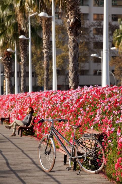 Valencia en bicicleta_03