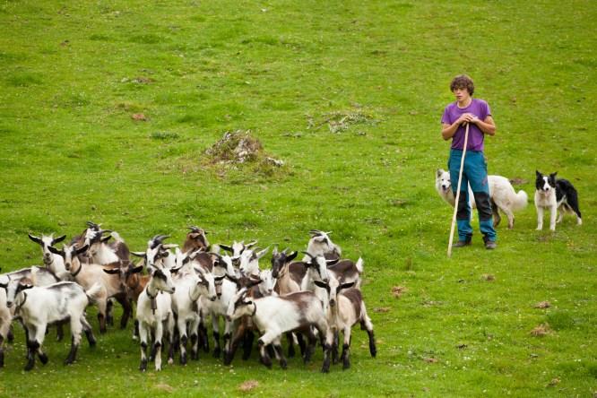 Covadonga pastor2