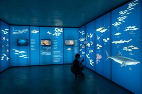 Museo de la Pesca. Paneles con las especies.