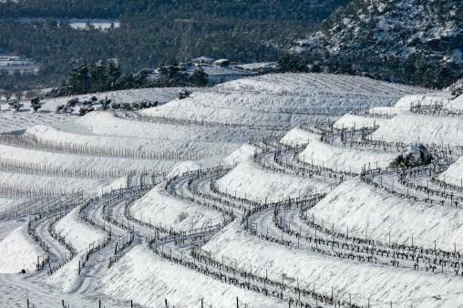 Viñas de la bodega Mas d'en Gil © Rafael López-Monné
