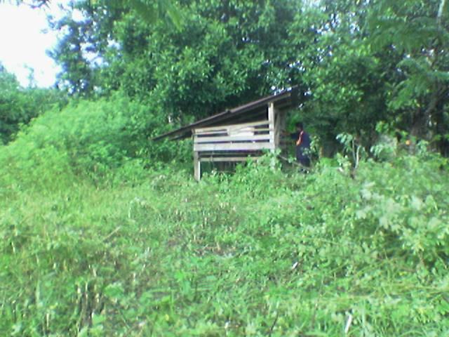 kandang kambing lama