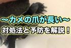 カメの爪が長い時の対処法を解説!爪切りは必要?折れた時の処置について