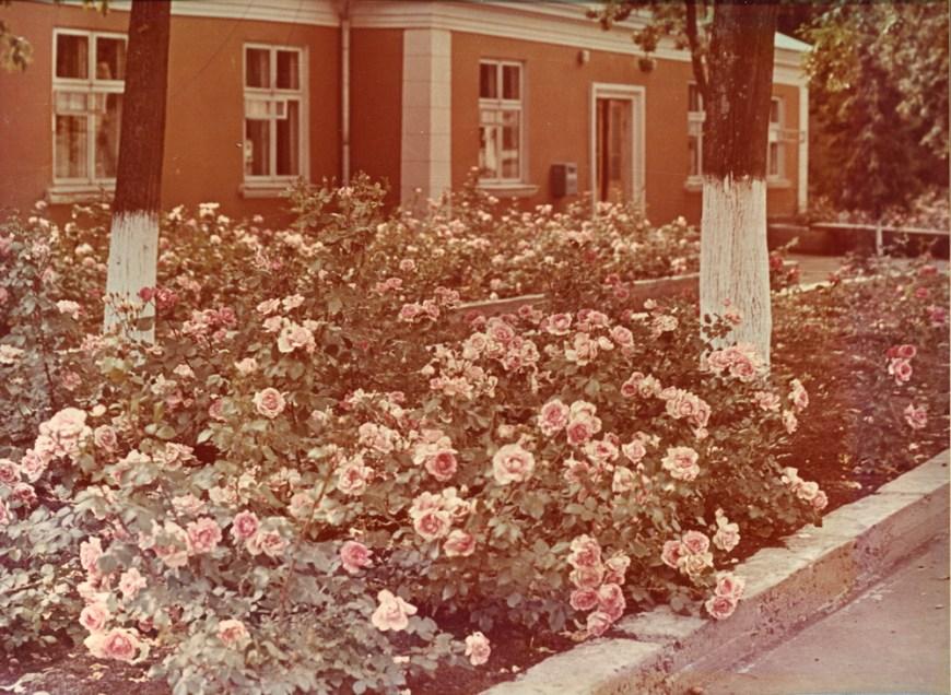 Розы у гостиницы